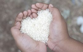 hands-holding-rice